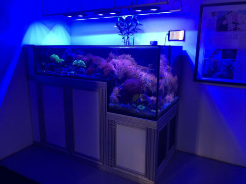 300 Gallons Custom Drop Off Aquarium