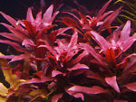 Abc Aquatic Plants