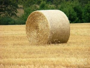 Straw bales and hay bales for sale