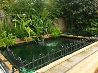 Midlands Koi and pond rehoming service