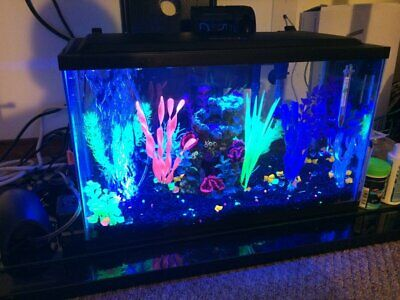 GloFish Aquarium Kit 5 gallon Fish Tank - 5x Tetra Whisper Filter Cartridges