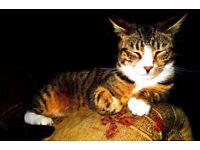 Missing Cat Upton West Yorkshire
