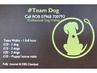 #Team Dog Professional Dog Walker in Southampton