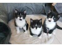 Happy playful loving kittens