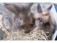 4 Beautiful rabbit bunnys.