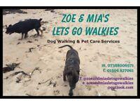 Professional Dog Walking & Pet Sitting Services
