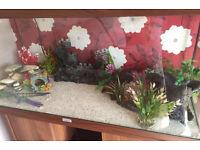SMART Automated Fish Tank Juwel Aquarium