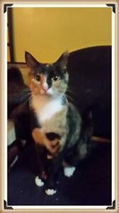 "Adult Female Cat - Tortoiseshell: ""Shelby"""
