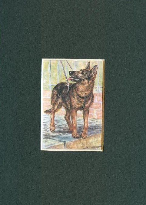 * German Shepherd - Dog Art Print - CLEARANCE