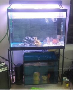 65g tank in excellent condition + METAL STAND + DUAL T5 LIGHTS