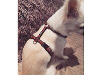 Walk'r'cise harness