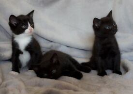 3 Cute Fluffy Kittens- Little Boys and Girl.