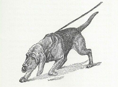 Bloodhound - Vintage Dog Art Print - 1954 Kirmse