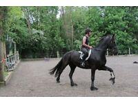 Confident Horse & Pony Rider