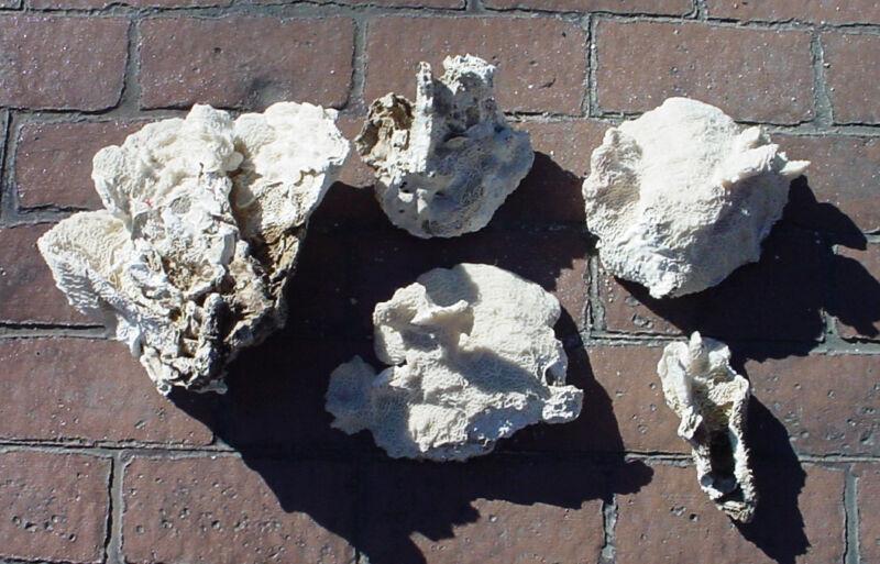 Qty of 5 - Lettuce Coral Rock - Aquariums