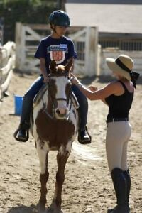 Horse and Rider Training