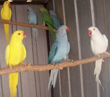 unwanted birds Warwick Farm Liverpool Area Preview