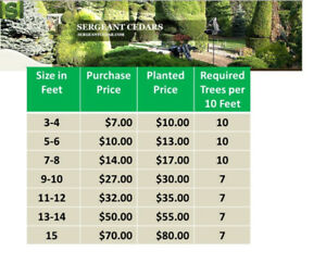 FULL AND HEALTHY CEDAR TREES AT UNBEATABLE PRICES