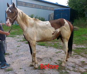 Looking for project horses