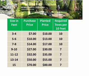 HEALTHY CEDAR TREES AT UNBEATABLE PRICES