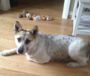 Paws for Love dog rescue has a 1-2 year old female adult