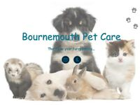 Bournemouth Pet Care: Pet Sitter | Dog Walking | Dog Walker | Cat feeding
