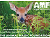 Fundraiser - The Animal Magic Foundation Ltd – Cheshire Warrington