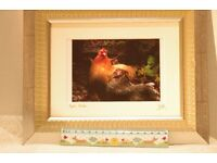 chickens: original photographic print in a silver frame