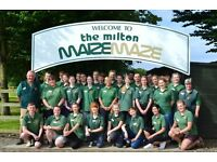 The Milton Maize Maze - Recruitment for various Catering positions at this busy summer attraction.