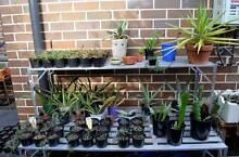 Backyard Bench Succulent Sale! Variety of Garden Plants! Eastwood Ryde Area Preview