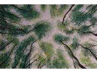THE BEECH FOREST - Original Oil Painting on Canvas (92x61 cm)