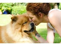Holistic Animal Carer, Dog Walker & Therapist . Compassion & Love is my way.