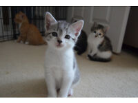 1 female 1 male ready 22nd July wormed, litter trained adorable