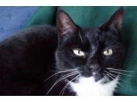 Missing Black & White Cat