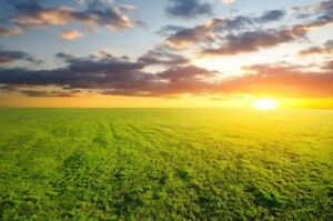 Agriculture - Land for sale