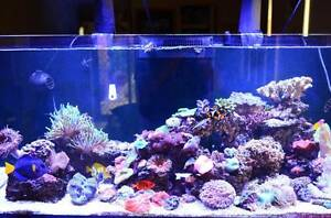 Red Sea Reefer 350 Marine Aquarium Ellenbrook Swan Area Preview