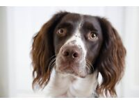 Dog walker looking for work in the West Midlands!