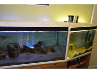 Malawi Fish Tanks and Fish excellent condition