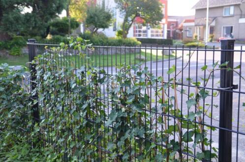 Goedkope Omheining Tuin : ≥ goedkoop hekwerk dubbelstaafmat tuin dieren bedrijf vijver