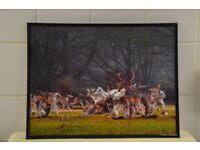 "Quality 12"" x 16"" Quality Matt photographs in Glass black Frames"