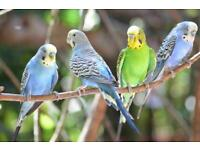 Budgies - Canaries - Finches - Hamsters - GuineaPigs
