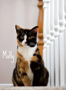 MEET MOLLY & LUCY...BONDED PAIR..SWEET & SILLY SIBLINGS