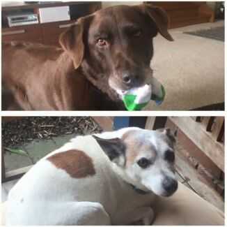 LOST DOGS - ELTHAM AREA! REWARD!!! Eltham North Nillumbik Area Preview