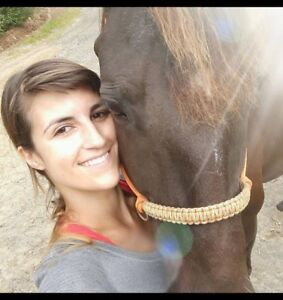 Experienced rider happy to exercise and pamper your horse!