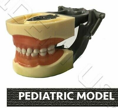 Dental Typodont Pediatric Model Compatible With Nissin Teeth 24 Teeth 200n