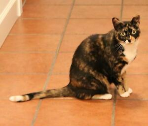 LOST Tortoiseshell Cat - Missing since Aug 11