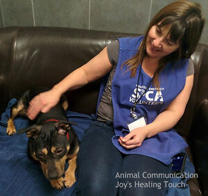 Animal Communication Sessions