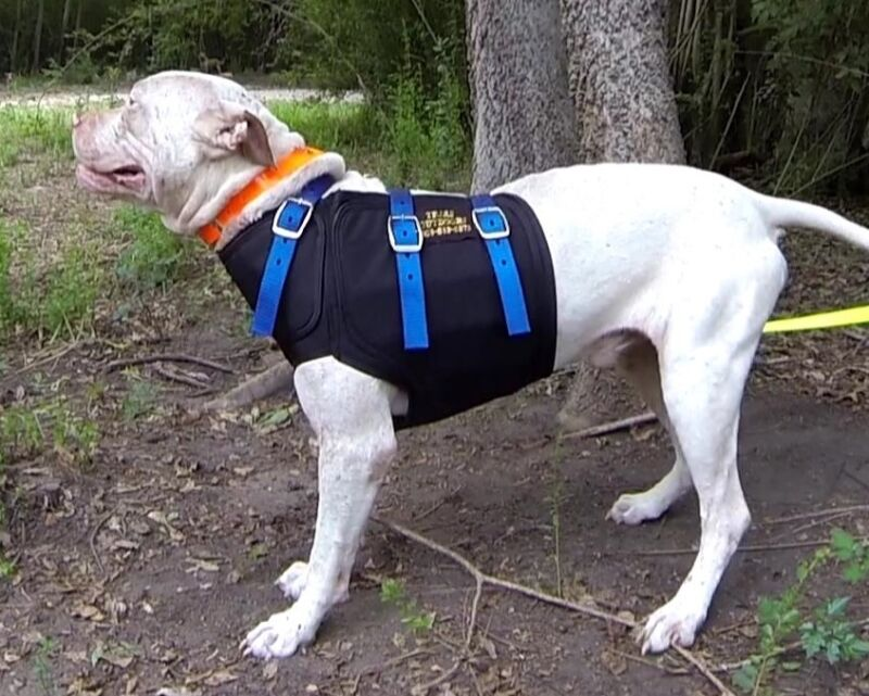 Pro Tect Hog Dog Short Cut Vest, with Super Strong Ballistic Nylon