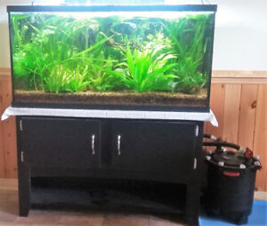 Well established 60 gallon low-tech planted tank and stand