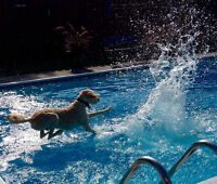 DOGGY SWIMMING LESSONS...